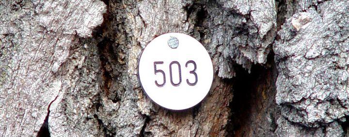 Borke eines Baumes mit Markierung