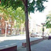Baum an einer Straße in der Stadt