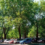Parkplatz mit großen schattenspenden Bäumen