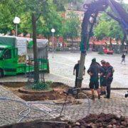 Bauarbeiter verlegen Pflaster um einen Baum herum