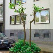 Verkümmerte Bäume am Straßenrand