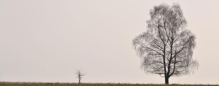 Ein kleiner und ein großer Baum auf einer Wiese