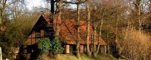 Bauernhaus hinter alten Bäumen
