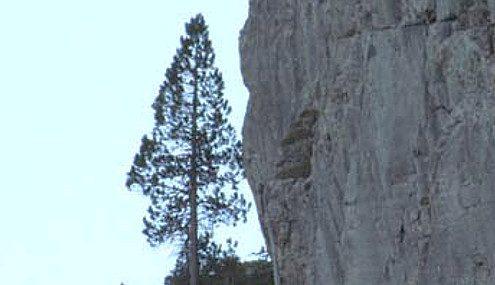 Starke Baumtypen: Beeindruckende Solitär-Bäume