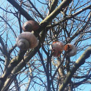Hüllen von Schnecken in einem Baum