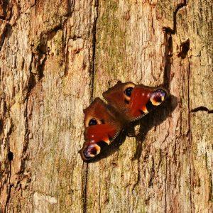 Schmetterling auf einem Baumstamm
