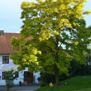 Baum vor einem Haus