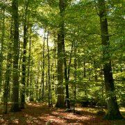 Wald aus verschiedenen Baumarten