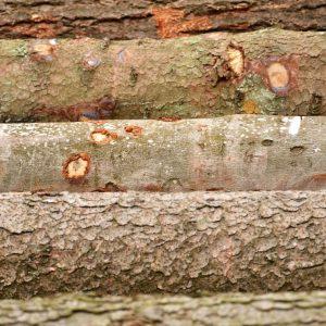 Holzstämme verschiedener Baumarten