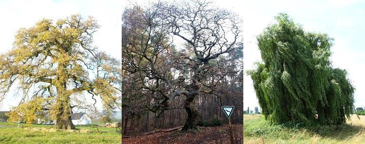 Collage aus verschiedenen Bäumen