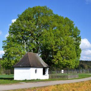 Große alte Linde hinter einer kleinen Kapelle