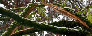 Der Länge nach aufgebrochener Ast eines Baumes
