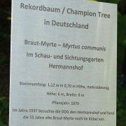 Metalltafel mit allen Daten zur Brautmyrte in Weinheim