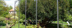 Großer Strauch mit vielen verwinkelten Ästen in einem Park