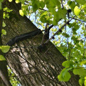 Ast eines Baumes ist mit Gurten und Seilen gesichert