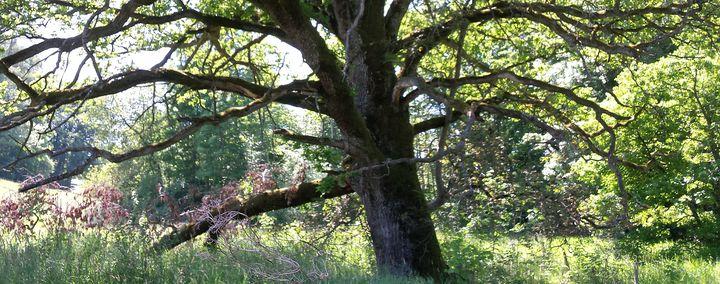 Baumpflege und Artenschutz – Management von Archebäumen