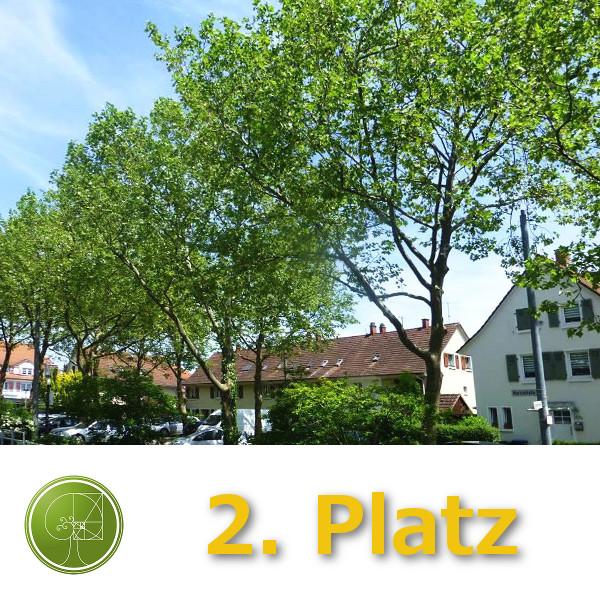 Pfefferer Baumkultur GmbH