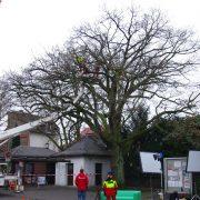 Arbeiter fahren mit einer Hubbühne in den Baum