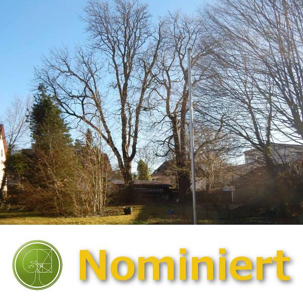 Dominik Wolfseher / GreenCare Baumpflege