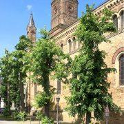 Gekappte Bäume vor der Kirche