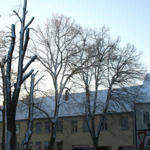 Linden vor Haus und Himmel mit Schnee