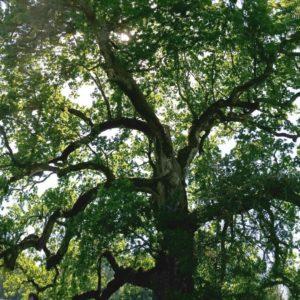 Baumpflege und Artenschutz - Management von Archebäumen