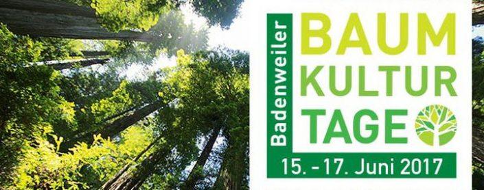 Logo Baum-Kultur-Tage und Blick in Baumkronen