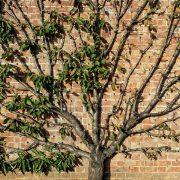 Baum der Flach an einer Wadn wächst