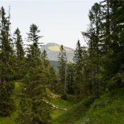 Bergwald vor einer Gebirgskulisse