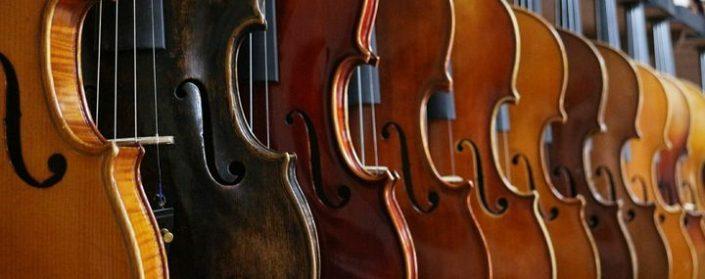 Mehrere Geigen in verschiedenen natürlichen Farbtönen