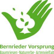 """Methusalem-Bäume auf dem """"Bernrieder Vorsprung"""""""