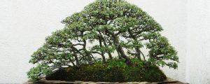 Kleiner Bonsai-Wald
