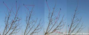 An einem Baum wird geziegt, welche Äste zu entfernen sind