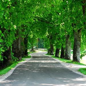 Allee, gesäumt von Bäumen