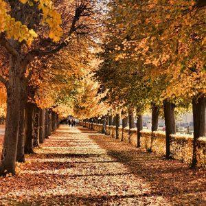 Herbstlich verfärbte Bäume in einem Park