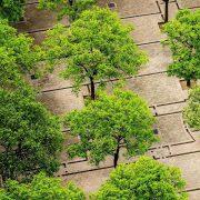 Bäume auf einem betonierten Platz