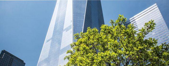 Grüner Baum vor einer modernen Hochhauskulisse