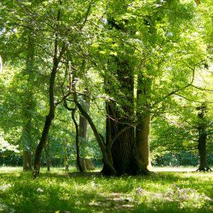 Parklandschaft aus jungen und alten Bäumen