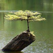 Kleiner Baum auf einem Stein, der aus dem Wasser ragt