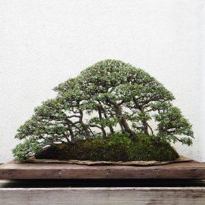 Bonsai Wald auf einer Steinplatte