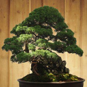 Bonsai in Schale mit Stein als Dekoelement