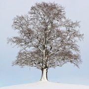 Ein Laubbaum im Winter