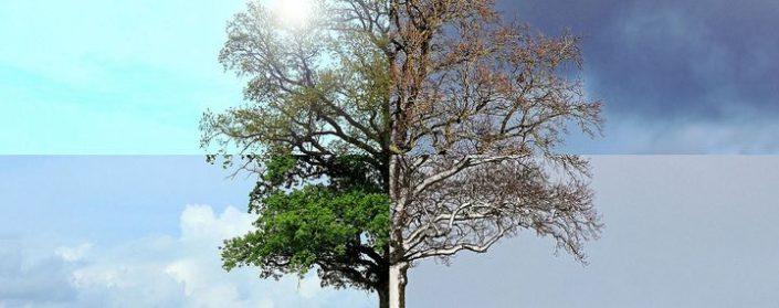 Ein Baum aus vier Bildern, welche die vier Jahreszeiten darstellen