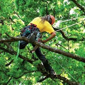 Ein Baumkletterer schwingt durch den Baum