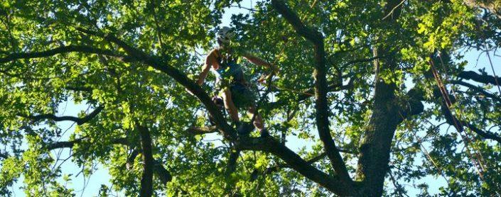 Baumkletterer auf einem Ast hoch oben im Baum