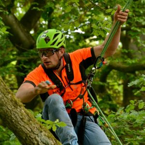 Baumpfleger mit persönlicher Schutzausrüstung klettert im Baum