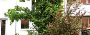 Bäume und Hecken vor einem Wohnhaus