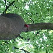 An einem Ast in der Krone eines Baumes hängt eine rote Dose