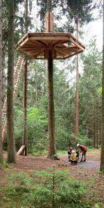 Eine Plattform aus Holz hoch oben in einem Waldbaum.