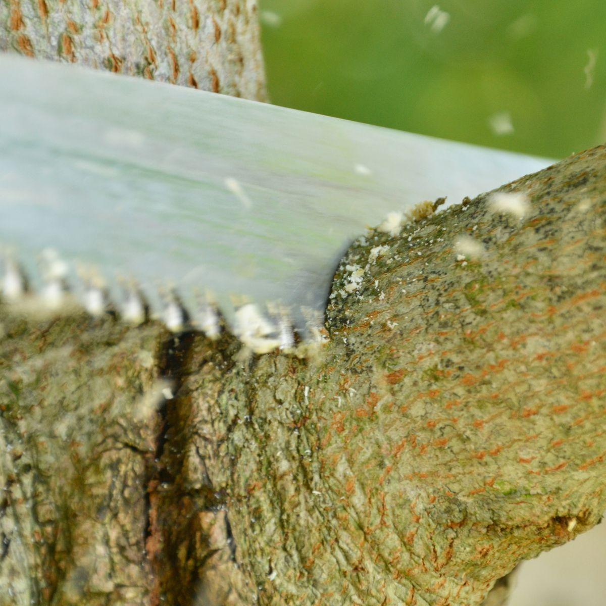 Bäume Fällen Wann Erlaubt